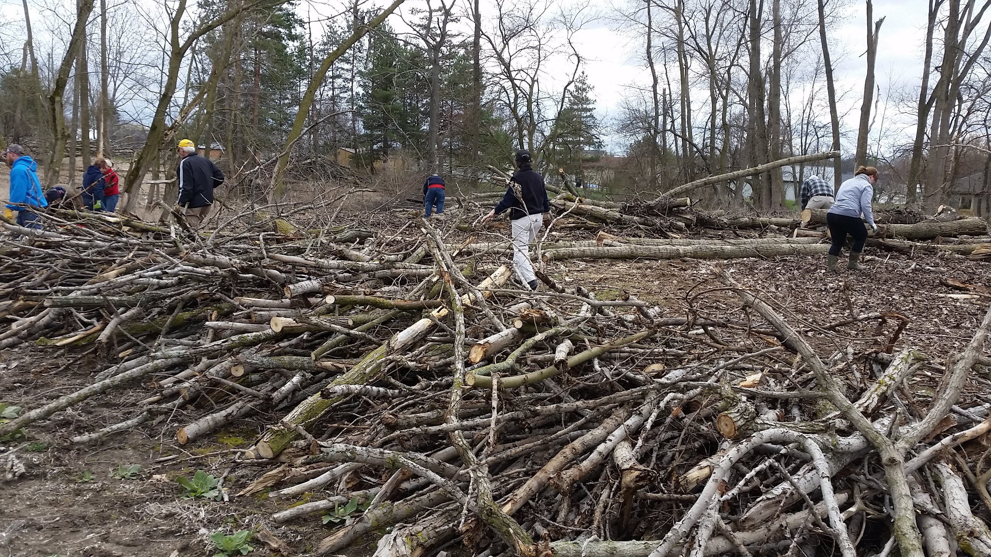 Volunteers at CLNP working hard to cut and pile brush!
